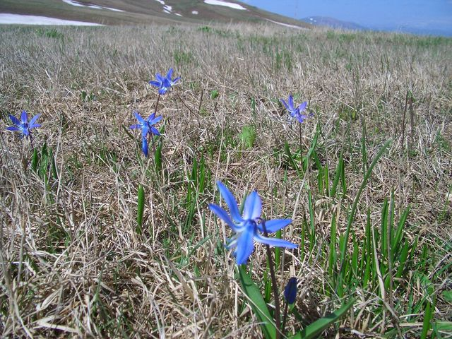 Spring in the Karackach Pass