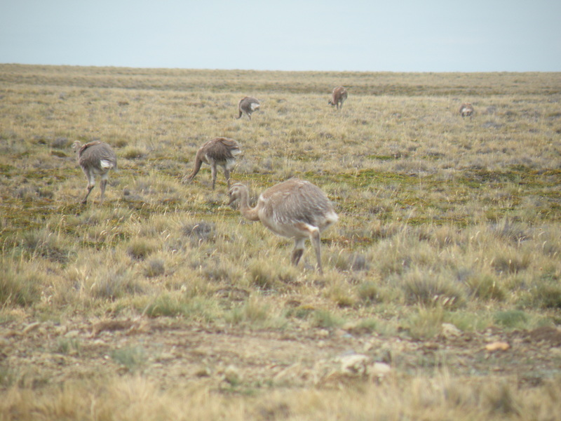Rheas near the Confluence Point