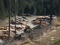 #11: Piled up Logs near the Confluence Point