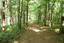#10: Hiking trail on the way back