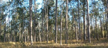 #1: Spotted gum forest, confluence is centre foreground