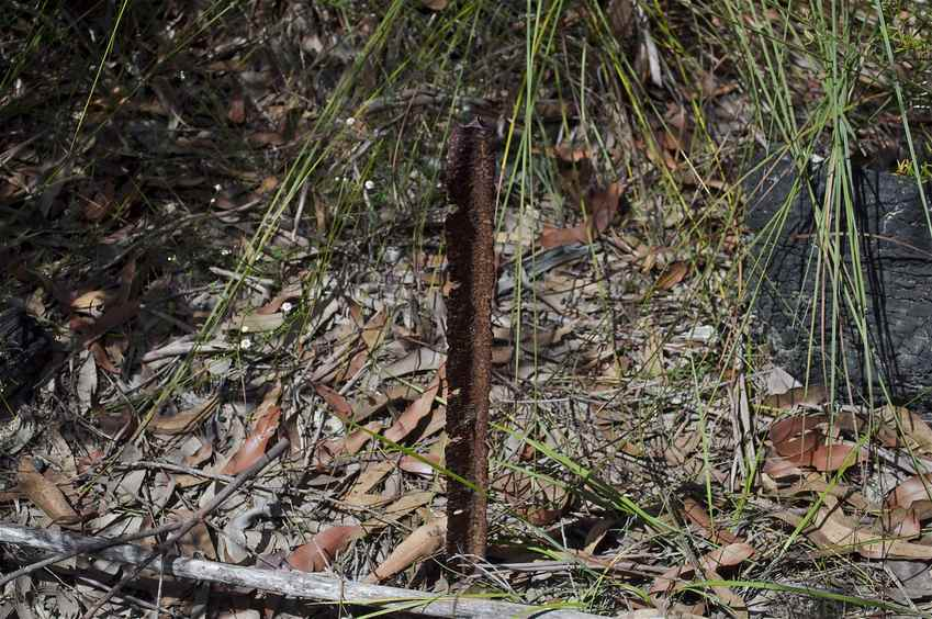 The confluence point is marked by this heavily-rusted metal post
