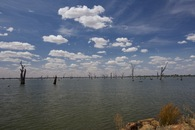 #12: Dead trees in Lake Mulwala, an artificial lake located east of the point