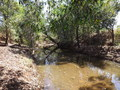 #7: Bamboo Creek less than 70m from the confluence site