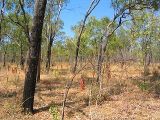 #1: General view (note - the baby termite mound in centre of pic is just in front of the confluence)