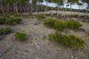 #5: The confluence point lies in this bare patch of ground, just in front of a thick patch of mangroves