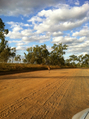 #3: many emu, kangaroo, bush pig on dusty unused roads