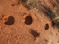 #6: Camel hoofprints at the site