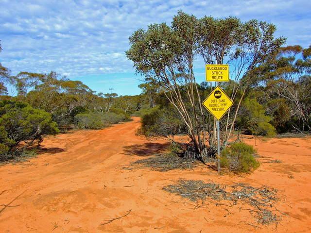 Buckleboo Stock Route through Pinkawillinie Conservation Park is a must do