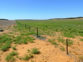 #8: The Fenceline showing the difference between the 2 Paddocks