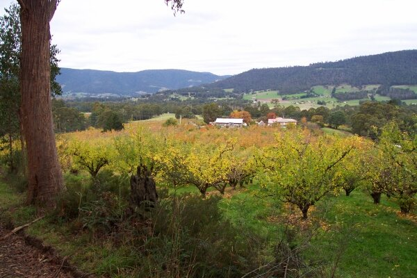Apple orchards of the Huon Valley from a point about 400 metres before the confluence
