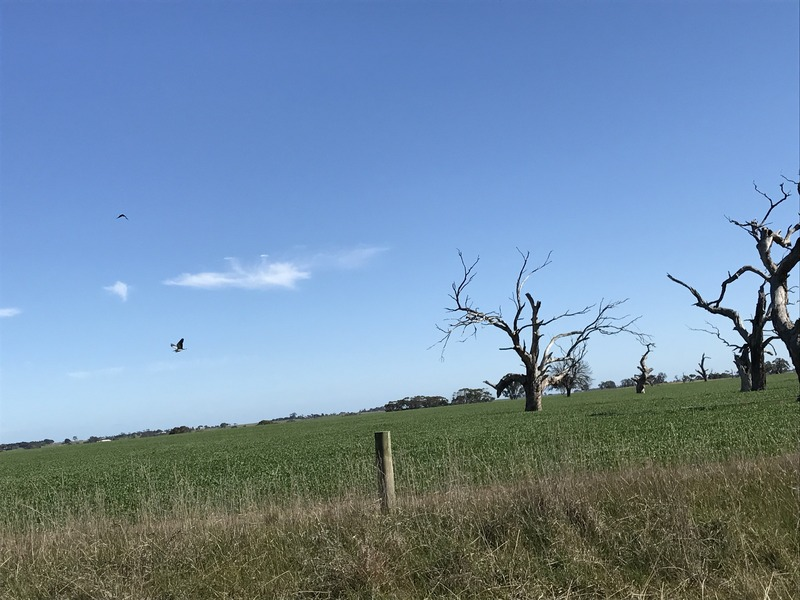 Big dead trees in fields about 1 km south of confluence point.