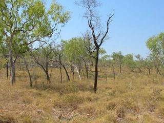 #1: General area - the confluence is about 2 metres in front of the dark tree in the center