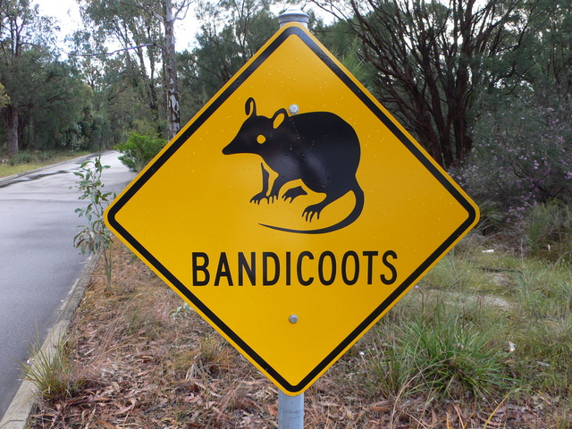 Would Have Loved To Have Seen A Bandicoot..