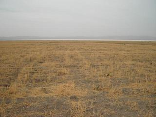 #1: the general area of the confluence (60m distance)