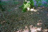 #5: Ground cover at the confluence point