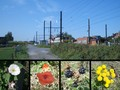 #9: Car, train, railway crossing and plants