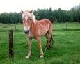 #10: Young curious horse