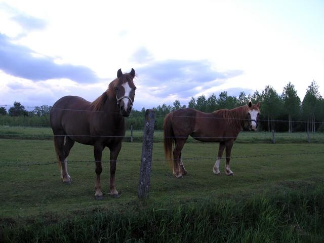 Horses guarding the path to the confluence