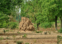#6: A termite mound close to the point