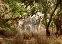 #9: Elephants in the bush, close to Boromo