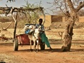 #8: Young boy moving around with his donkey