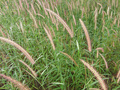 #7: Grass plants around the Confluence