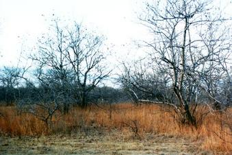 #1: Facing north through the 'caatinga' (semi-arid deciduos vegetation)