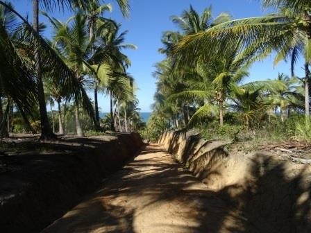 Palmeras y camino. Palms and path