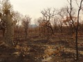 #7: Recent forest fire in the region