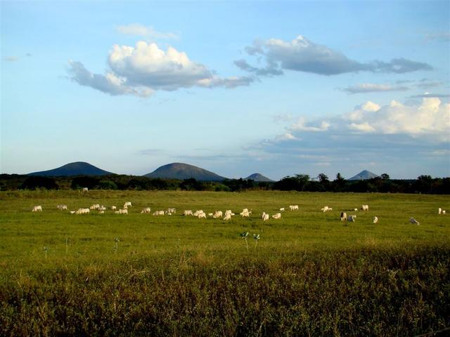 The CP is located in a cattle pasture