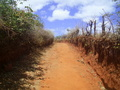 #8: A estrada de terra passa a 13 metros da confluence - dirt road 13 meters close to the confluence