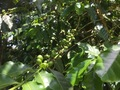 #10: Coffee beans at the confluence point