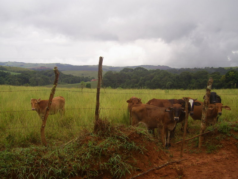 Visão a partir da estrada de terra, com o pasto e a confluência ao fundo - view from dirty road, with pasture and confluence in background