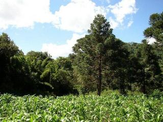 #1: General view of the confluence looking North.