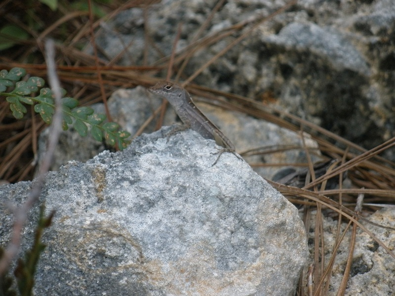 Friendly confluence lizard
