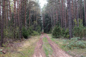 #7: Road in the forest