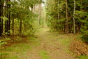 #7: Forest path