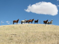 #6: Horses looking at us during entire hike