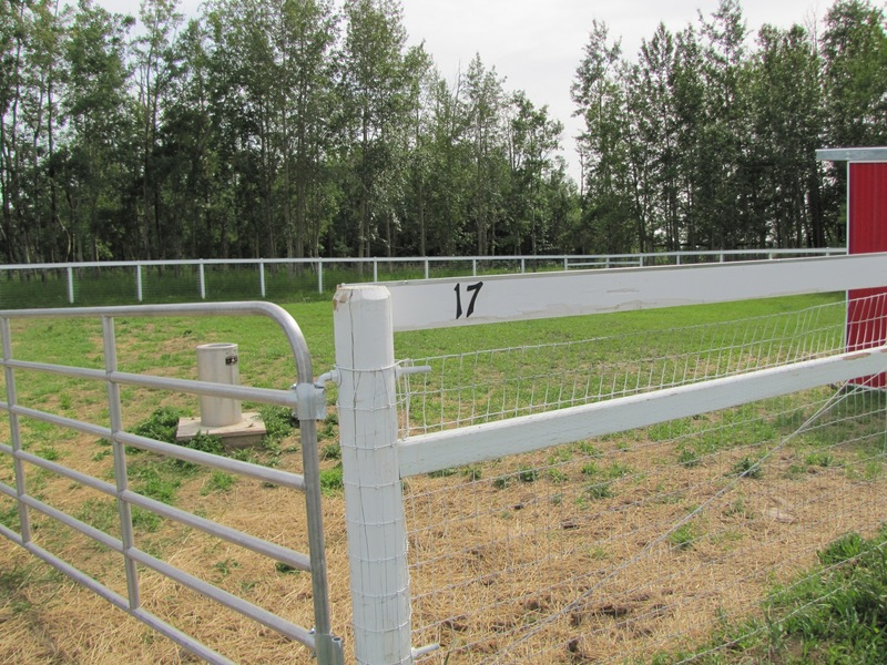 54N 113W - Horse Pen 17 - Where the confluence is!