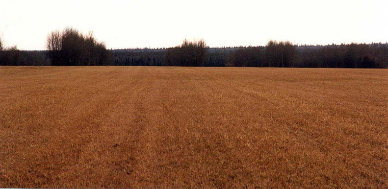 Stubble: The view south, toward Township Road 694