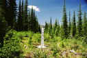 #8: Boundary monument 195 facing West