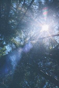 #1: The sun through the treetops
