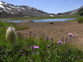 #8: Alpine wildflowers and lake