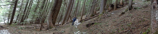 #1: Panoramic view. Forest trail to Garibaldi lake