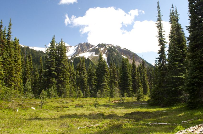 View of Mount Garibaldi from the meadow near the confluence point