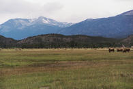 #3: Field, mountains, and curious cows near Kleena Kleene