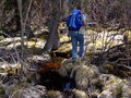 #8: swampy part 1km from the confluence point