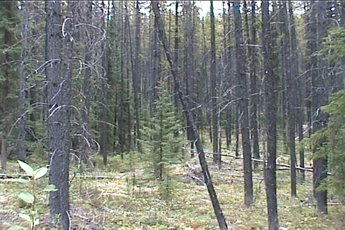 forest, 2.91km to confluence