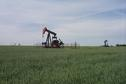 #9: Pump jacks in a grain field 3.3 km from the confluence.